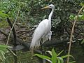 Great Egret SMTC.jpg