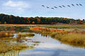 Great Meadows National Wildlife Refuge 2007-10-17 (edited).jpg