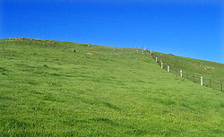 Les récoltes d'août au 4ème siècle av.JC dans FLORE FRANCAISE 250px-Green_field