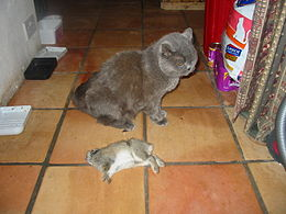 Gretel with rabbit.jpg