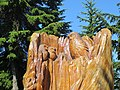 Grouse Mountain, British Columbia (2013) - 16.JPG