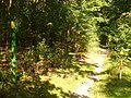 Grunewald - Gaslinie - geo.hlipp.de - 28461.jpg