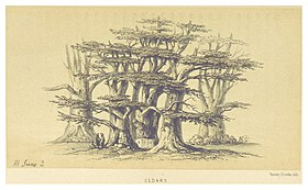 Cedars, in the hills of Ain Aata (2 June 1860)[1]