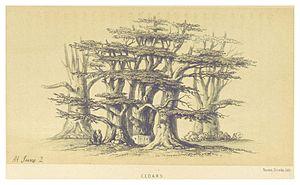 Ain Aata - Image: HARVEY(1861) p 177 CEDARS