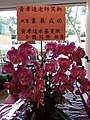 HKCL 香港中央圖書館 CWB 展覽 exhibition flowers February 2019 SSG 10.jpg