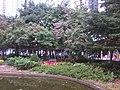 HK Tai Kok Tsui 樂群街公園 Lok Kwan Street Park trees 01 Dec-2012.jpg