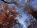 Hamm, Germany - panoramio (2626).jpg