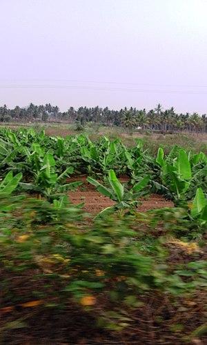 Harohalli - Image: Harohalli.3