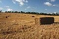 Harvested wheat field - geograph.org.uk - 949626.jpg