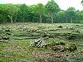 Hawksden Park Wood - geograph.org.uk - 177663.jpg