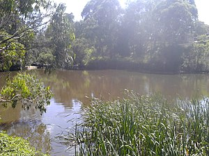 Parramatta River - Headwaters of the Parramatta River