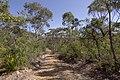 Heathcote NSW 2233, Australia - panoramio (53).jpg