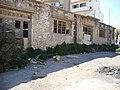 Heraklion, Greece - panoramio - Περιβαλ.Σύλλογος Αγ.… (24).jpg