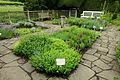 Herb Garden - Fountains Hall - North Yorkshire, England - DSC00547.jpg