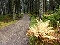 Herbstwald, St. Englmar.jpg