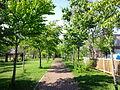 Higashiyama-park path-of-poplars.JPG