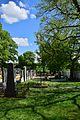 Hollabrunn - Enzersdorf im Thale - ND HL-019 - Winterlinden am Friedhof - 2.jpg
