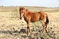 Horse Indian village 04.jpg