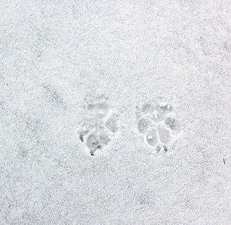 Animal track - Image: Hundespur P1130198