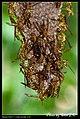 Hymenoptera (6022581648).jpg