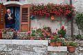 I fiori di Opi.jpg