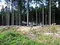 Idarwald - bei Stipshausen - panoramio (3).jpg