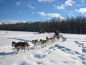 Iditarod Trail - Dogsledder on the Iditarod Trail
