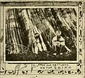 """Image from page 108 of """"Seattle and the Orient"""" (1900) (14598481580).jpg"""