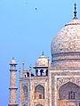 India-6210 - Details of the Taj Mahal - Flickr - archer10 (Dennis).jpg