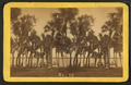 Indian River at Rockledge, from Robert N. Dennis collection of stereoscopic views.png
