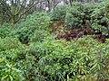 Inside Leckie Broch - geograph.org.uk - 921307.jpg
