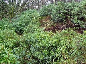 Leckie Broch - Overgrown interior of Leckie Broch