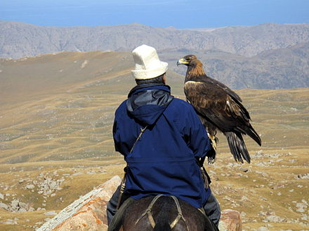 Hunting with an eagle Ishenbek and Berkut scout for prey. (3968888530).jpg
