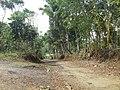 JLN MENUJU KP CIDERES DARI ARAH PANUMBANGAN - panoramio.jpg