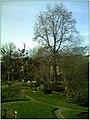 January Frost Botanic Garden Freiburg - Master Botany Photography 2014 - panoramio (5).jpg