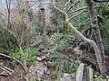 Jardín botánico del monasterio de Lluc (2).jpg