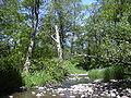 Johnson Creek2.JPG