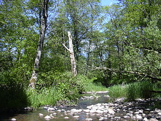 Johnson Creek (Willamette River) - Johnson Creek near Regner Road in Gresham
