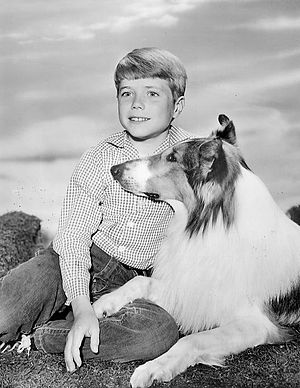Jon Provost - Provost as Timmy Martin in the television series Lassie, c. 1962
