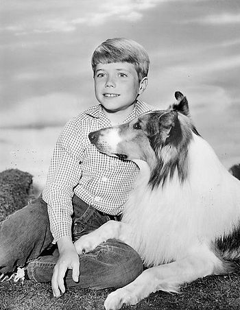 Publicity photo of Jon Provost and Lassie from...