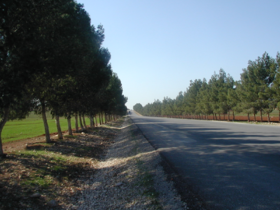 طريق بلدة الشجرة الأردنية