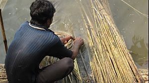 Baishya Kapali - Extraction of jute fibre.