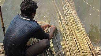 Baishya Kapali - Extraction of jute fibre.