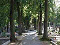 Křenovice (okres Vyškov) - hřbitovní alej.jpg