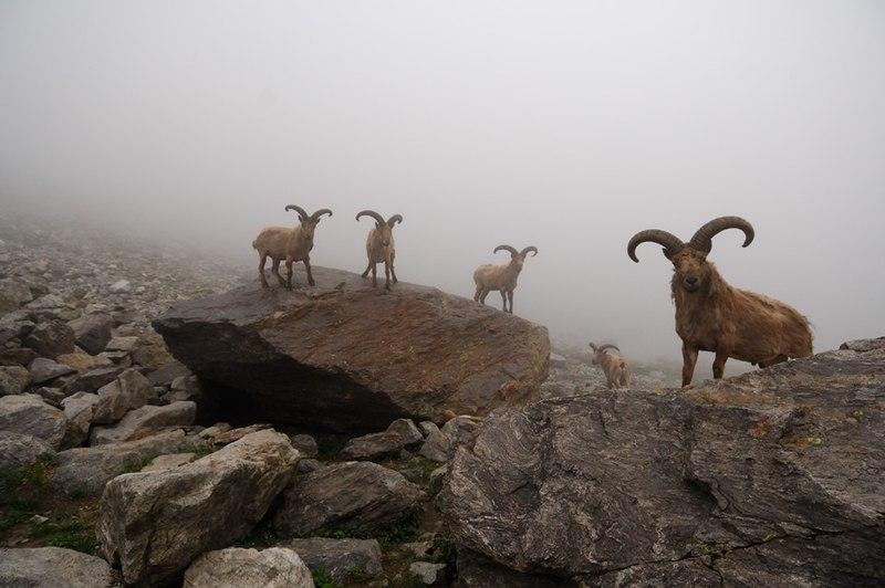 File:Kabardino-Balkarski nature reserve.jpg