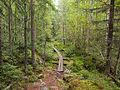 Kangasvuori nature trail - duckboard 3.jpg