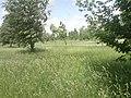 Kastryčnicki District, Mogilev, Belarus - panoramio (60).jpg