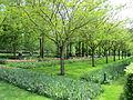Keukenhof Garden (61).JPG
