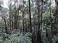 Kinabalu Park, Ranau, Sabah, Malaysia - panoramio (11).jpg