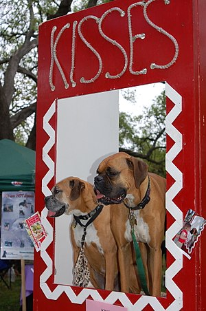 Kissing booth - A dog kissing booth, for charitable purposes.
